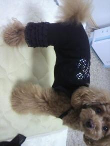 愛犬鈴ちゃん~トイプードル☆ライフスタイル~-2012060113000001.jpg