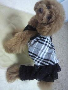 愛犬鈴ちゃん~トイプードル☆ライフスタイル~-2012060113010001.jpg