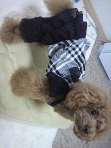 愛犬鈴ちゃん~トイプードル☆ライフスタイル~-2012060113010000.jpg