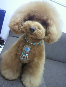 愛犬鈴ちゃん~トイプードル☆ライフスタイル~-2012060213140002.jpg