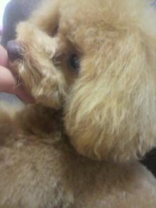 愛犬鈴ちゃん~トイプードル☆ライフスタイル~-2012060213270000.jpg
