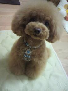愛犬鈴ちゃん~トイプードル☆ライフスタイル~-2012060213160002.jpg
