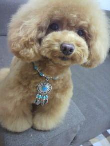 愛犬鈴ちゃん~トイプードル☆ライフスタイル~-2012060213160000.jpg
