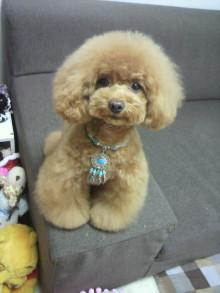 愛犬鈴ちゃん~トイプードル☆ライフスタイル~-2012060213160001.jpg