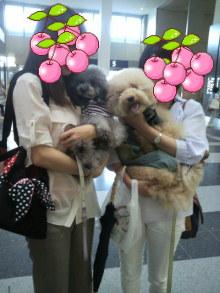 愛犬鈴ちゃん~トイプードル☆ライフスタイル~-2012061816590001.jpg