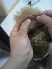 愛犬鈴ちゃん~トイプードル☆ライフスタイル~-2012061513520000.jpg