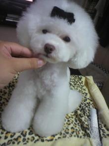 愛犬鈴ちゃん~トイプードル☆ライフスタイル~-2012061916590000.jpg