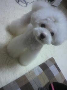 愛犬鈴ちゃん~トイプードル☆ライフスタイル~-2012061920200000.jpg