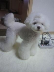 愛犬鈴ちゃん~トイプードル☆ライフスタイル~-2012061920220001.jpg