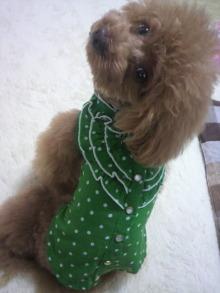 愛犬鈴ちゃん~トイプードル☆ライフスタイル~-2012061511080000.jpg