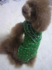 愛犬鈴ちゃん~トイプードル☆ライフスタイル~-2012061511070002.jpg
