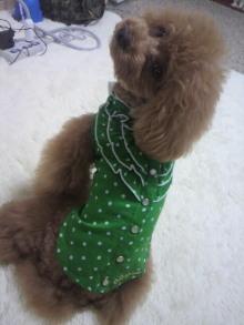 愛犬鈴ちゃん~トイプードル☆ライフスタイル~-2012061511070000.jpg