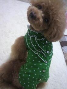 愛犬鈴ちゃん~トイプードル☆ライフスタイル~-2012061511080001.jpg
