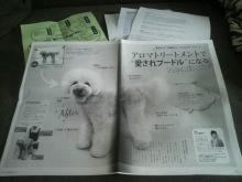 愛犬鈴ちゃん~トイプードル☆ライフスタイル~-2012061314200000.jpg