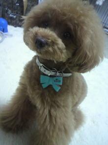 愛犬鈴ちゃん~トイプードル☆ライフスタイル~-2012061610410001.jpg