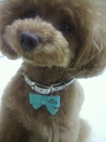 愛犬鈴ちゃん~トイプードル☆ライフスタイル~-2012061610400001.jpg