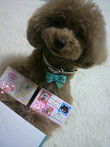 愛犬鈴ちゃん~トイプードル☆ライフスタイル~-2012061610440001.jpg