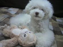 愛犬鈴ちゃん~トイプードル☆ライフスタイル~-2012061913580002.jpg