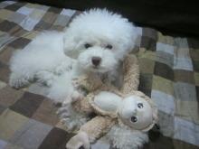 愛犬鈴ちゃん~トイプードル☆ライフスタイル~-2012061913590002.jpg