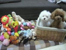 愛犬鈴ちゃん~トイプードル☆ライフスタイル~-2012061914050001.jpg
