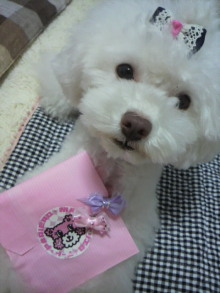 愛犬鈴ちゃん~トイプードル☆ライフスタイル~-2012062117090000.jpg
