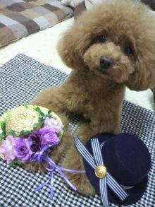 愛犬鈴ちゃん~トイプードル☆ライフスタイル~-2012062117110000.jpg