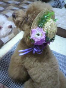 愛犬鈴ちゃん~トイプードル☆ライフスタイル~-2012062117130001.jpg