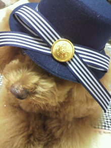 愛犬鈴ちゃん~トイプードル☆ライフスタイル~-2012062117150002.jpg