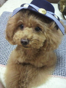 愛犬鈴ちゃん~トイプードル☆ライフスタイル~-2012062117150000.jpg