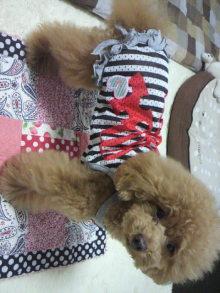 愛犬鈴ちゃん~トイプードル☆ライフスタイル~-2012062117280000.jpg