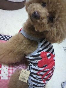 愛犬鈴ちゃん~トイプードル☆ライフスタイル~-2012062117280001.jpg