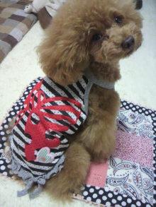 愛犬鈴ちゃん~トイプードル☆ライフスタイル~-2012062117270000.jpg