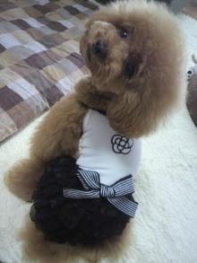 愛犬鈴ちゃん~トイプードル☆ライフスタイル~-2012062212560000.jpg