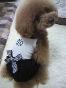 愛犬鈴ちゃん~トイプードル☆ライフスタイル~-2012062212560001.jpg