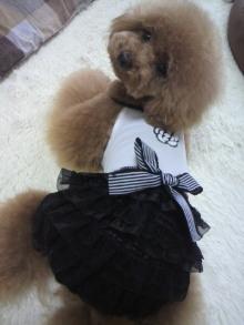 愛犬鈴ちゃん~トイプードル☆ライフスタイル~-2012062212570003.jpg