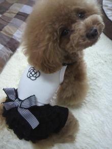 愛犬鈴ちゃん~トイプードル☆ライフスタイル~-2012062213000000.jpg