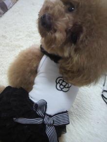 愛犬鈴ちゃん~トイプードル☆ライフスタイル~-2012062212580000.jpg