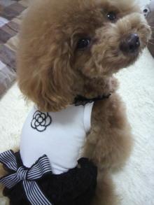 愛犬鈴ちゃん~トイプードル☆ライフスタイル~-2012062212580001.jpg