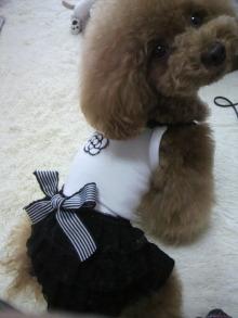 愛犬鈴ちゃん~トイプードル☆ライフスタイル~-2012062212590001.jpg