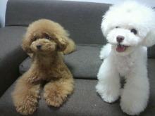 愛犬鈴ちゃん~トイプードル☆ライフスタイル~-2012062218190000.jpg