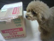愛犬鈴ちゃん~トイプードル☆ライフスタイル~-2012062413010000.jpg