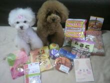 愛犬鈴ちゃん~トイプードル☆ライフスタイル~-2012062413070000.jpg