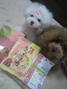 愛犬鈴ちゃん~トイプードル☆ライフスタイル~-2012062413090000.jpg