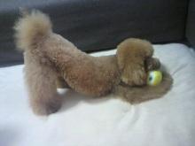 愛犬鈴ちゃん~トイプードル☆ライフスタイル~-2012062413120002.jpg