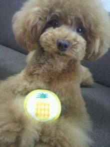 愛犬鈴ちゃん~トイプードル☆ライフスタイル~-2012062413130000.jpg