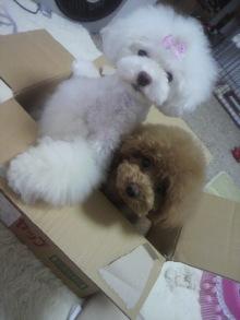 愛犬鈴ちゃん~トイプードル☆ライフスタイル~-2012062413520000.jpg