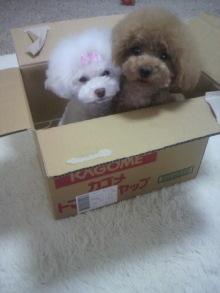 愛犬鈴ちゃん~トイプードル☆ライフスタイル~-2012062413530000.jpg