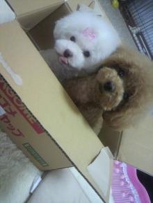 愛犬鈴ちゃん~トイプードル☆ライフスタイル~-2012062413520001.jpg
