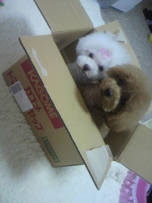 愛犬鈴ちゃん~トイプードル☆ライフスタイル~-2012062413530001.jpg