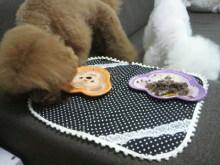 愛犬鈴ちゃん~トイプードル☆ライフスタイル~-2012062414100001.jpg